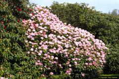 2015-04-17 Minterne Magna Gardens, Dorset.  (22)022