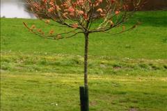 2015-04-17 Minterne Magna Gardens, Dorset.  (31)031