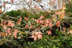 2015-04-17 Minterne Magna Gardens, Dorset.  (34)034