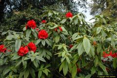 2015-04-17 Minterne Magna Gardens, Dorset.  (35)035