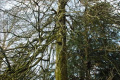 2015-04-17 Minterne Magna Gardens, Dorset.  (42)042