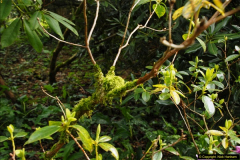 2015-04-17 Minterne Magna Gardens, Dorset.  (43)043