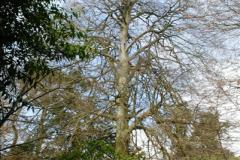 2015-04-17 Minterne Magna Gardens, Dorset.  (48)048
