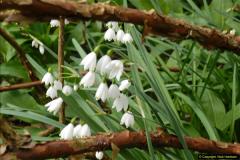 2015-04-17 Minterne Magna Gardens, Dorset.  (55)055