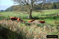 2018-10-09 Welsh Hiland Railway.  (104)104