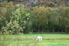 2018-10-09 Welsh Hiland Railway.  (17)017