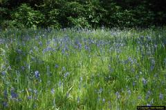 2016-05-14 Stourhead NT.  (33)033