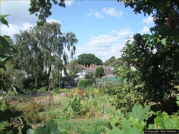 2014-08-23 Million £ Allotment in Blake Dene Road. .   (5)166