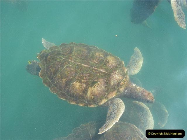 2005-11-12 Grand Caymen Islands.  (105)106