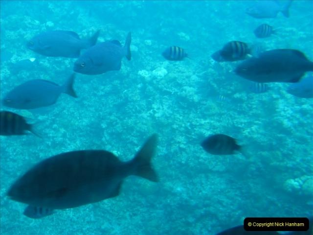 2005-11-12 Grand Caymen Islands.  (64)065