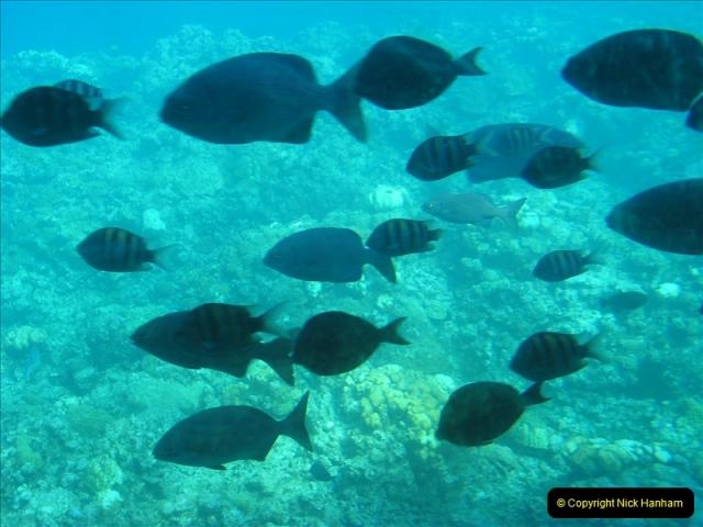 2005-11-12 Grand Caymen Islands.  (65)066