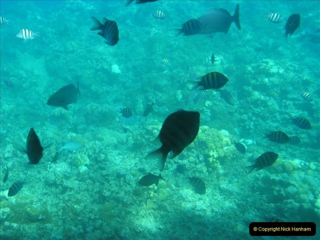 2005-11-12 Grand Caymen Islands.  (72)073