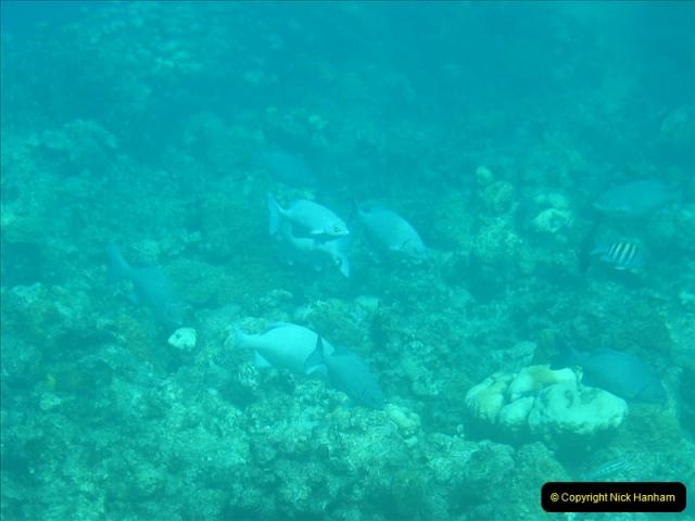 2005-11-12 Grand Caymen Islands.  (77)078
