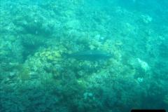 2005-11-12 Grand Caymen Islands.  (70)071