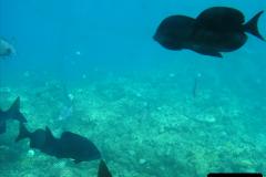 2005-11-12 Grand Caymen Islands.  (71)072