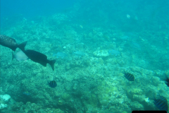 2005-11-12 Grand Caymen Islands.  (76)077