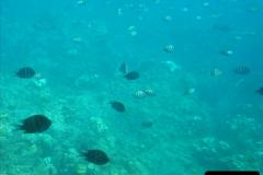 2005-11-12 Grand Caymen Islands.  (78)079
