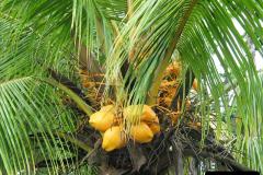 2005-11-16 Puerto Limon, Costa Rica.  (58)225