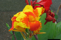 2005-11-16 Puerto Limon, Costa Rica.  (61)228