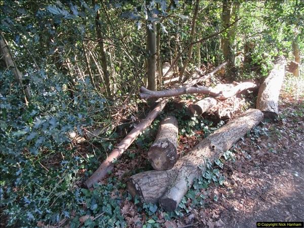 2018-02-05 Alder Hills (History) Parkstone, Poole, Dorset.  (14)042