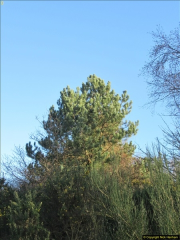 2018-02-16 Alder Hills Nature Reserve - A second visit.  (27)086
