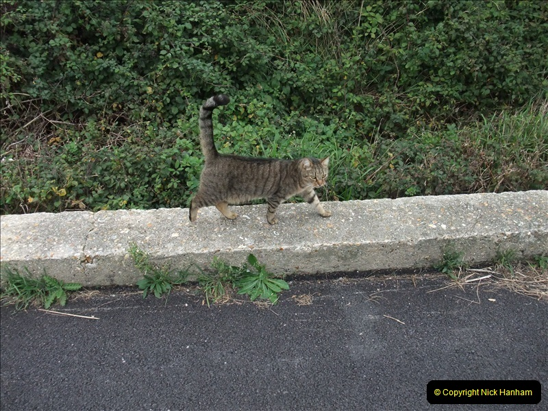 2009-10-15 Weymouth. Rodwell Trail & Weymouth Tramway (17)247