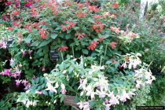 2016-08-24 RHS Wisley Gardens.  (36)036