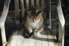 Ringwood the Railway Cat. Passed on but never forgotten