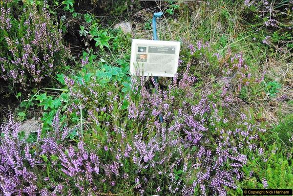 2017-08-24 Cairngorms National Park.  (278)278
