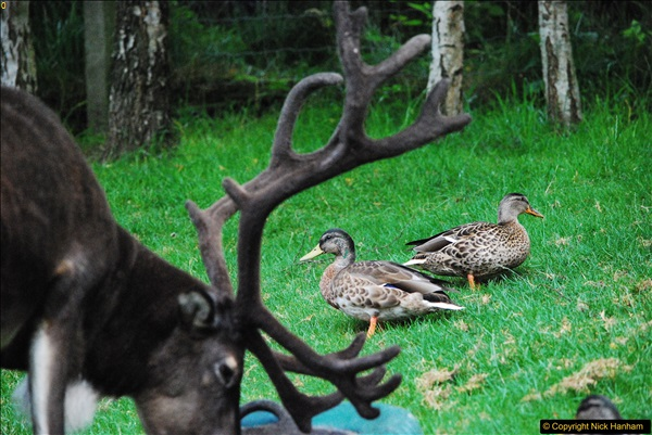 2017-08-24 Cairngorms National Park.  (45)045