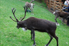 2017-08-24 Cairngorms National Park.  (39)039