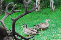 2017-08-24 Cairngorms National Park.  (46)046