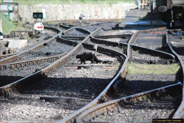 2017-03-31 The Swanage Railway Strictly Bulleid Gala.  (343)343