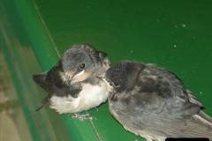 2008-09-05 Norden Nest. Found in station building. (6)0237