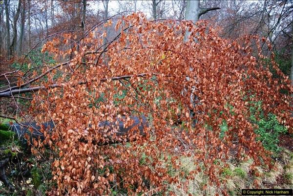 2014-11-21 The Woodland in Winter. Wendover Woods, Buckinhhamshire.  (100)100