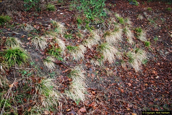 2014-11-21 The Woodland in Winter. Wendover Woods, Buckinhhamshire.  (101)101