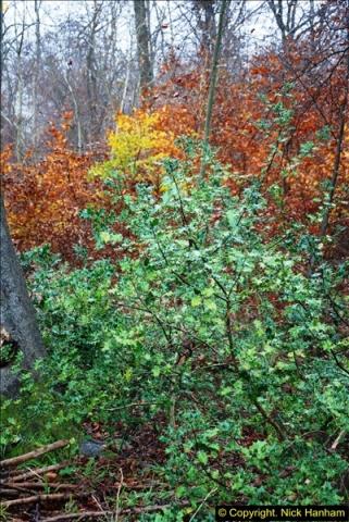 2014-11-21 The Woodland in Winter. Wendover Woods, Buckinhhamshire.  (102)102