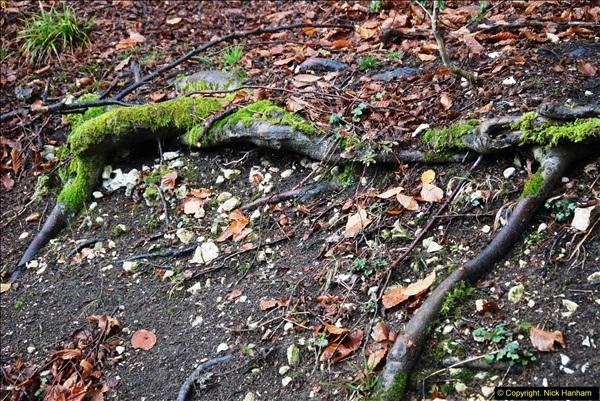 2014-11-21 The Woodland in Winter. Wendover Woods, Buckinhhamshire.  (104)104