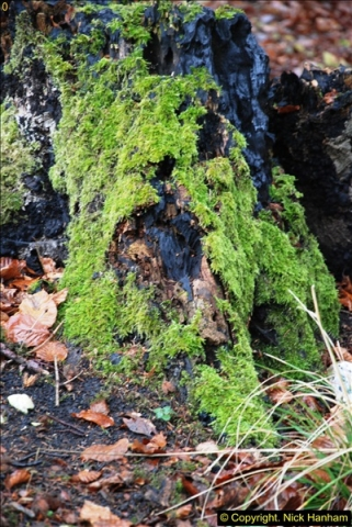 2014-11-21 The Woodland in Winter. Wendover Woods, Buckinhhamshire.  (105)105