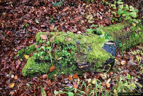 2014-11-21 The Woodland in Winter. Wendover Woods, Buckinhhamshire.  (106)106