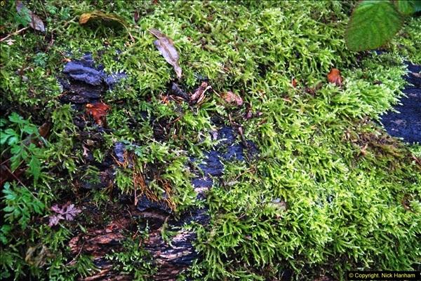 2014-11-21 The Woodland in Winter. Wendover Woods, Buckinhhamshire.  (107)107