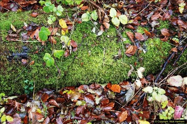 2014-11-21 The Woodland in Winter. Wendover Woods, Buckinhhamshire.  (108)108
