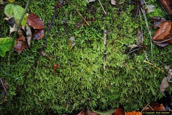 2014-11-21 The Woodland in Winter. Wendover Woods, Buckinhhamshire.  (109)109