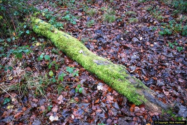 2014-11-21 The Woodland in Winter. Wendover Woods, Buckinhhamshire.  (11)011