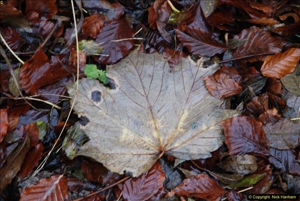 2014-11-21 The Woodland in Winter. Wendover Woods, Buckinhhamshire.  (110)110