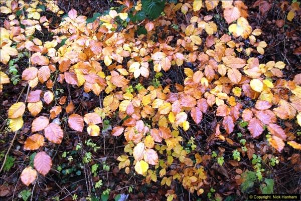2014-11-21 The Woodland in Winter. Wendover Woods, Buckinhhamshire.  (111)111
