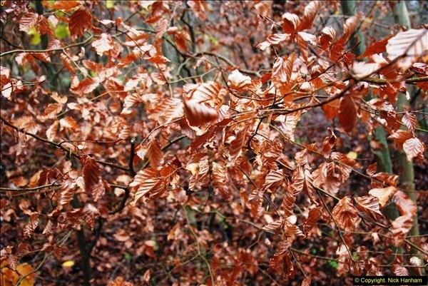2014-11-21 The Woodland in Winter. Wendover Woods, Buckinhhamshire.  (112)112