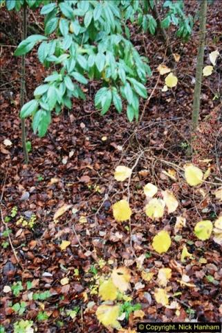 2014-11-21 The Woodland in Winter. Wendover Woods, Buckinhhamshire.  (113)113