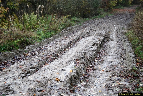 2014-11-21 The Woodland in Winter. Wendover Woods, Buckinhhamshire.  (115)115
