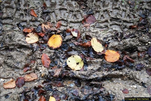 2014-11-21 The Woodland in Winter. Wendover Woods, Buckinhhamshire.  (117)117